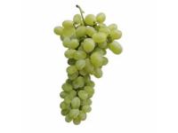 Vīnogas gaišas Victoria 1.šķ.Itālija