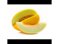Melone dzeltena Honey Dew 1šķ. Brazīlija